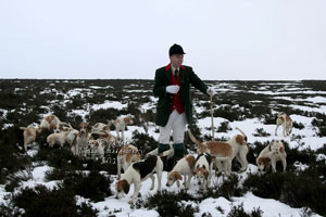 Beagle images in the Lake District by Betty Fold Gallery