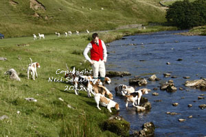 Beagles Photographs and images by Betty Fold Gallery Hawkshead Hill Ambleside Cumbria English Lake District