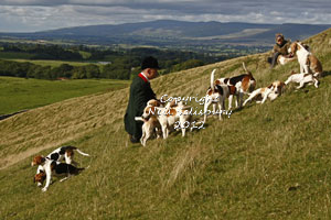Beagles on the fells by Betty Fold Gallery