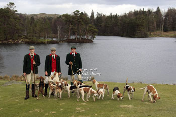 Beagles at Tarn Hows Lake District by Betty Fold Gallery