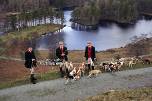 Beagles at Tarn Hows in Cumbria by Neil Salisbury of Betty Fold Gallery