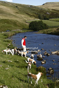 Beagles in the Lake District by Betty Fold Gallery