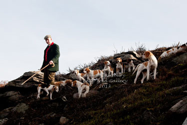 Black Combe Beagles photography by Betty Fold Gallery Hawkshead Cumbria