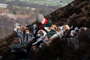 Beagle Images by Betty Fold Gallery Hawkshead Cumbria