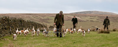 Black Combe Beagles Images by Betty Fold Gallery
