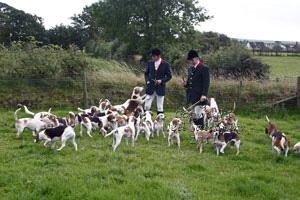 Beagles by Neil Salisbury Betty Fold Gallery