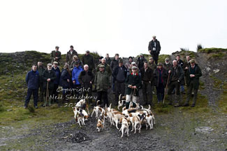 Black Combe Beagles Photographs by Betty Fold Gallery Hawkshead Hill Cumbria