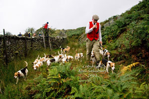 The Black Combe Beagles by Betty Fold Gallery