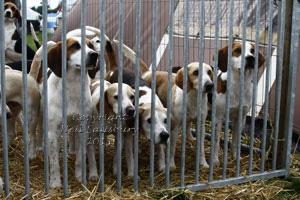 Black Combe Beagles by Neil Salisbury
