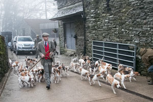 Beagles in Cumbria by Betty Fold Gallery