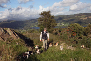 Beagling at Coniston by Betty Fold Gallery
