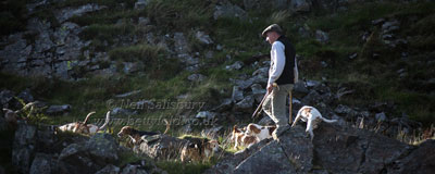 Black Combe Beagles Photography by Betty Fold Gallery