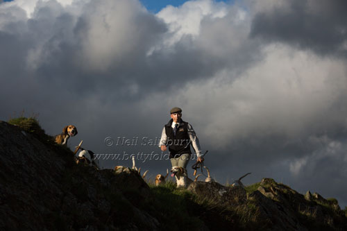 Black Combe Beagles Fine Art Prints by Betty Fold Gallery