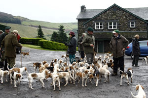 BSSNS Beagles photographs by Neil Salisbury Betty Fold Gallery Hawkshead Cumbria