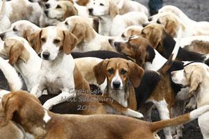 Beagle photographer Neil Salisbury Betty Fold Gallery Hawkshead Cumbria
