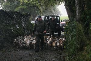 BSSNS Beagles in Cumbria by Betty Fold Gallery Hawkshead Hill