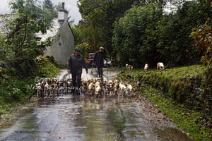 Beagles in Troutbeck Cumbria by Betty Fold Gallery