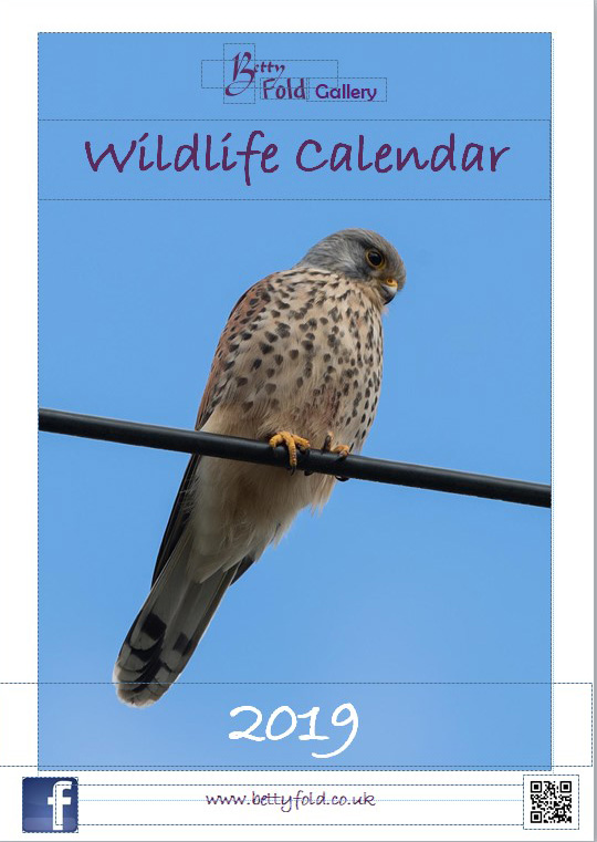 Wildlife Calendars from Betty Fold Gallery