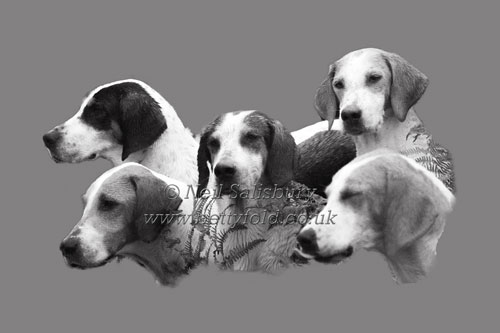 Hound Studies by Betty Fold Gallery