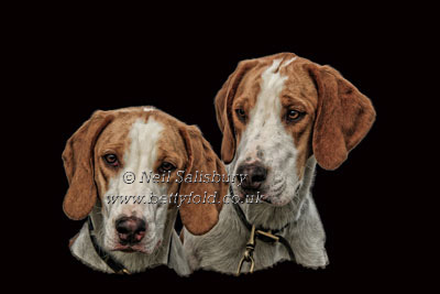 Foxhound Photographic Art by Betty Fold Gallery