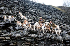 Hounds on quarry by Betty Fold Gallery
