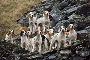 Foxhound Photography by Hawkshead Photographer Neil Salisbury