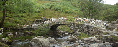 Coniston Foxhounds on Sweden Bridge