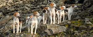 Hounds by Betty Fold Gallery Hawkshead Lake District
