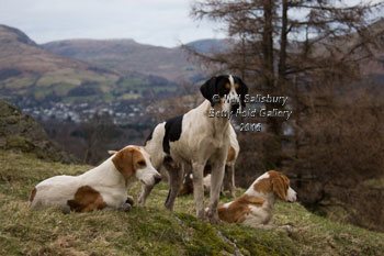 Fell Foxhounds by Betty Fold Gallery