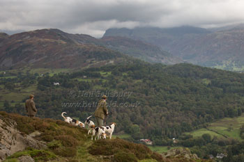 Coniston Foxhounds by Betty Fold Gallery