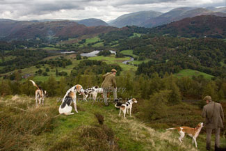Hounds above Elterwater by Betty Fold Gallery