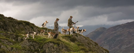 Foxhounds on the Lakeland Fells by Betty Fold Gallery