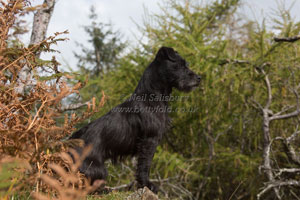 Patterdale Terrier Photography by Betty Fold Gallery