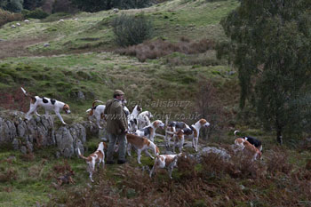 Hounds in Lake District by Betty Fold Gallery