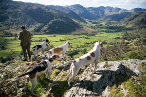 Hunting in Langdale by Betty Fold Gallery