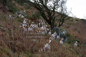 Fell Foxhound Photography by Betty Fold Gallery
