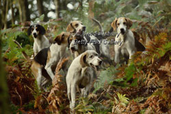 Hunting with the Fellhounds by Betty Fold Gallery