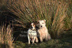 Jack Russell Photography by Betty Fold Gallery