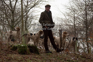 Cumbrian Fell Hounds by Betty Fold Gallery
