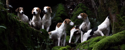 Groups of foxhounds by Betty Fold Gallery