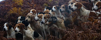 Hounds by Betty Fold Gallery