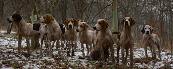 Lake District hunting photography by Betty Fold Gallery