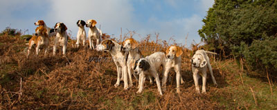 Foxhounds by Betty Fold Gallery