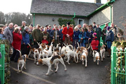 Fox hound images by Betty Fold Gallery