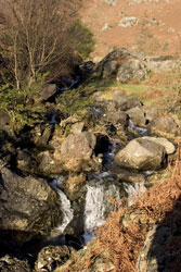 Lake District Photograph Easdale Beck Grasmere by Betty Fold Gallery