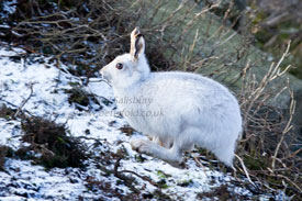 White Hare Photography by Betty Fold Gallery