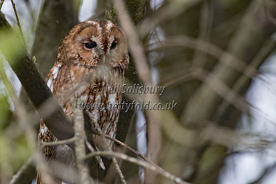 Owl photography by Betty Fold Gallery