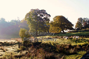Lakeland Photographs by Betty Fold Gallery