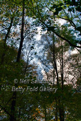 Images of Lakeland by Betty Fold Gallery