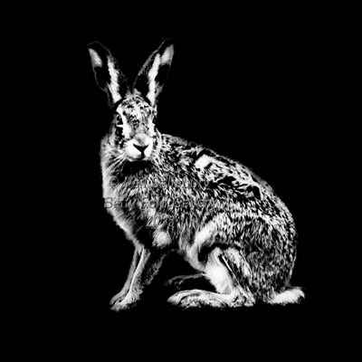 Hare Photography by Betty Fold Gallery